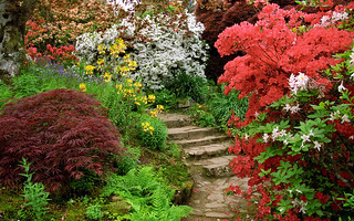 Scotney Castle Landscape Gardens, Kent, England | Flowering azaleas, ferns and acers bordering a path (4 of 16) | by ukgardenphotos