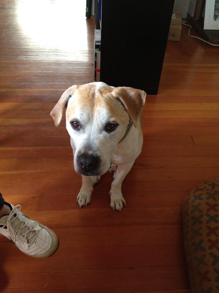 nerve sheath tumor dog