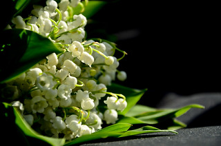 Lily of the Loire Valley | by The Hungry Cyclist