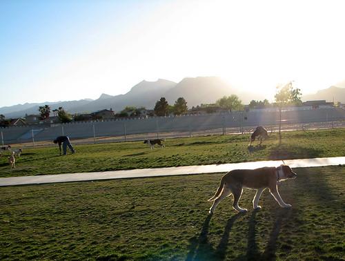 Meyer Park Dog Park