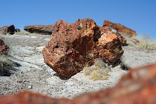 Petrified forest I | by smiling_da_vinci
