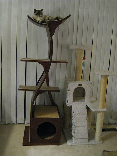 Side-by-Side Comparison of the New and Old Cat Tree | by yyhh.org