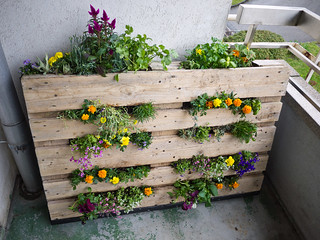 My pallet garden, completed | by Stephanie Booth