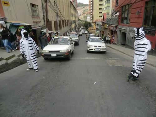 Cebras en la Calle de La Paz, Bolivia