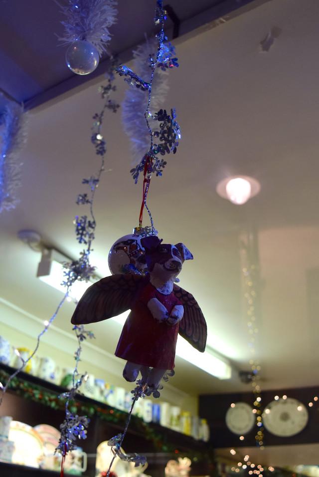 Cosmos China Angel, Christmas 2016 | www.rachelphipps.com @rachelphipps