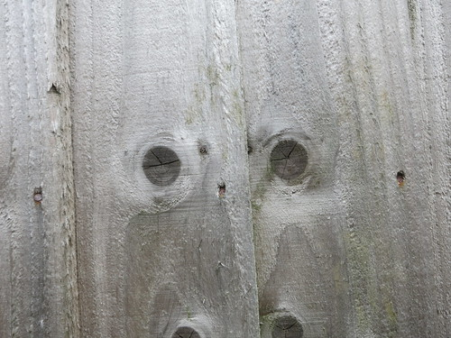 fence eyes