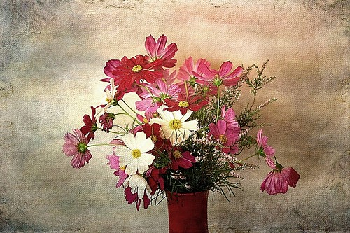 Floral composition with cosmos | by mamietherese1