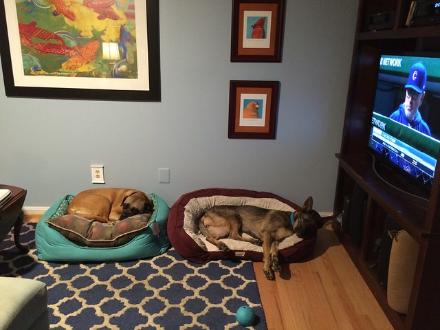 Greta and Zille each in individual dog beds