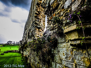 Jervaulx Abbey | by TiG Mee