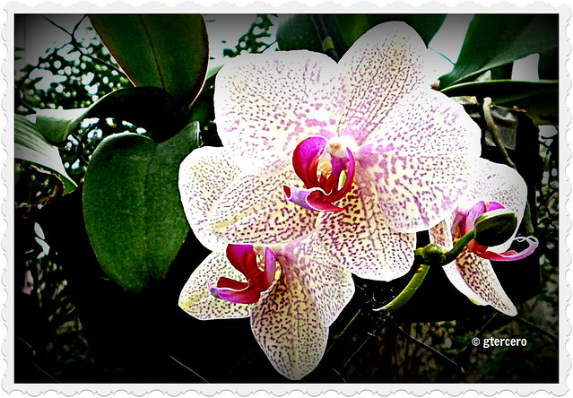Flor hermafrodita y unisexual definition