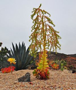 Succulents and Cactus | by Bill Gracey