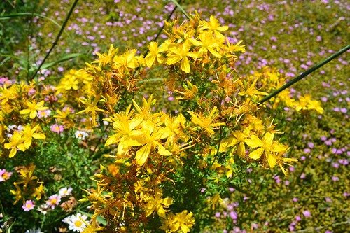 Herbal Remedies For Epilepsy In Dogs Uk