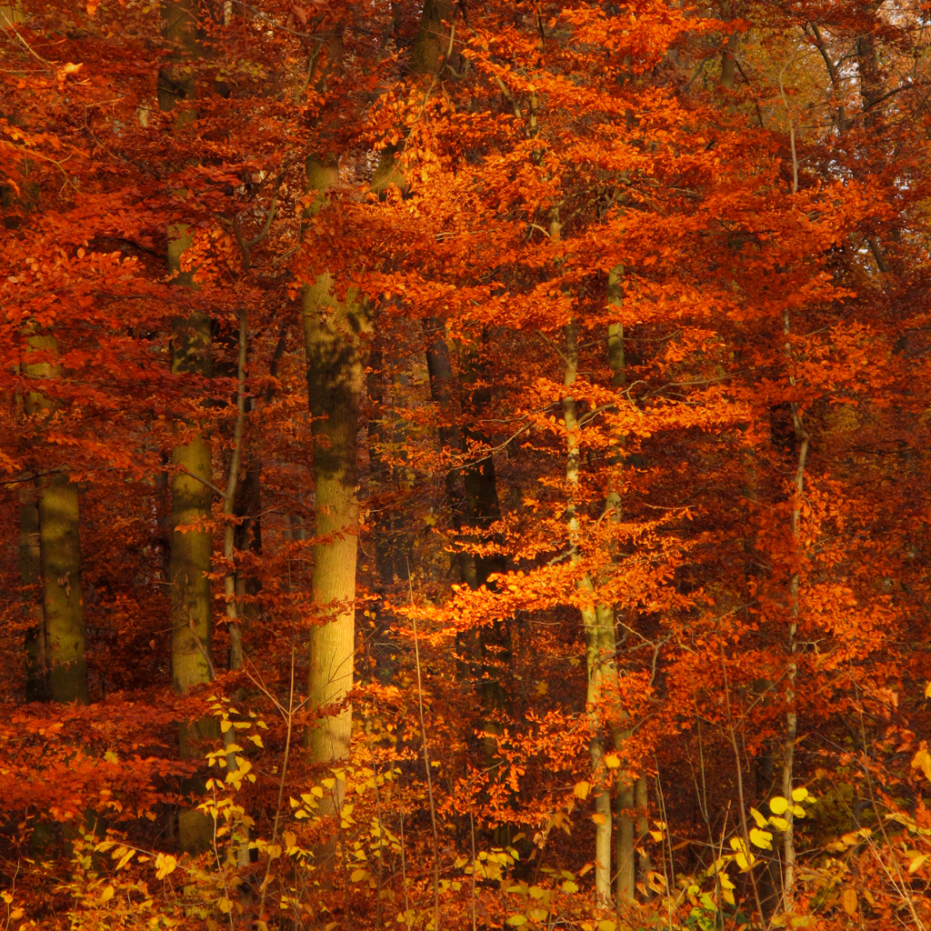 ... Autumn Light In The Forest | By Batikart