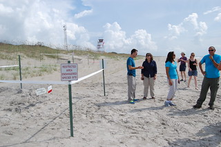 One of two new loggerhead nests found early morning at Camp Lejeune on August 8, 2013 | by USFWS/Southeast