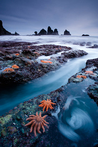West Coast Starfish Colony This Is A Version Of A Shot I