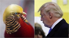 Meet 'Trump bird', the latest Internet sensation from China