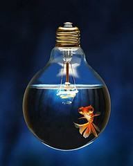 a real light-fish | www.light-fish.co.uk | tim barber | flickr, Reel Combo