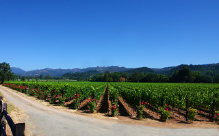 Napa Valley Vineyard | by Rennett Stowe