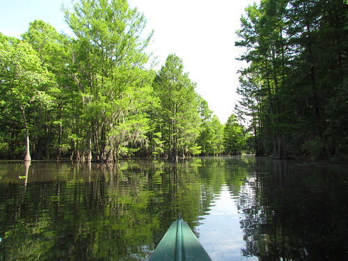 Lowcountry Unfiltered - Sparkleberry Swamp - May 2012 (29) | by greenkayak73