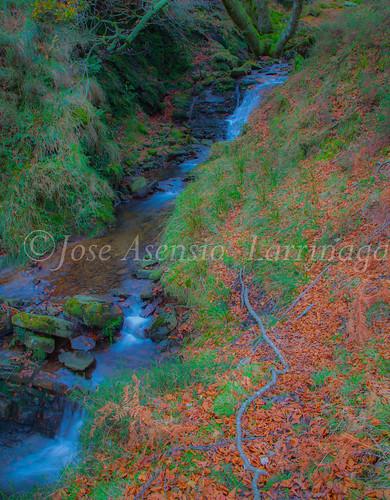 Parque natural de Gorbeia #DePaseoConLarri #Flickr      -2051