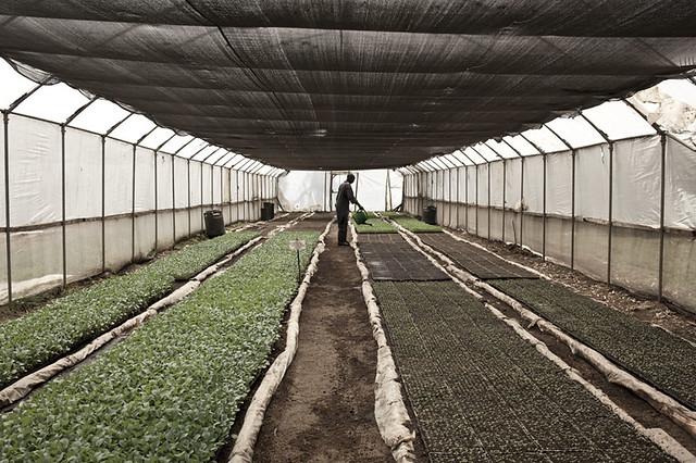 Organic Farm Kenya