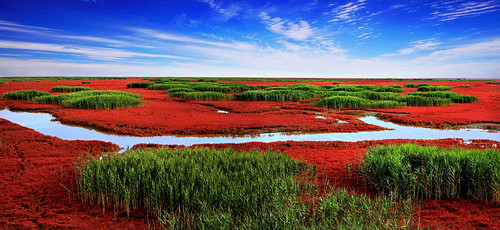 Red Beach from Panjing, China | by MJiA