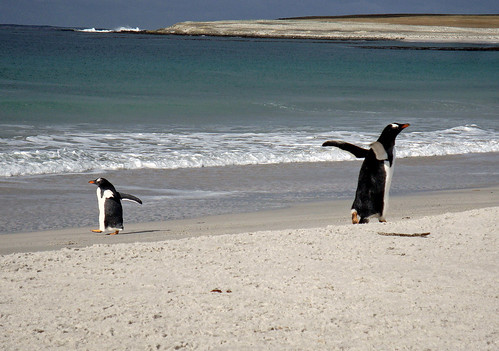 Greg's Falklands Photos | by Flickr Al