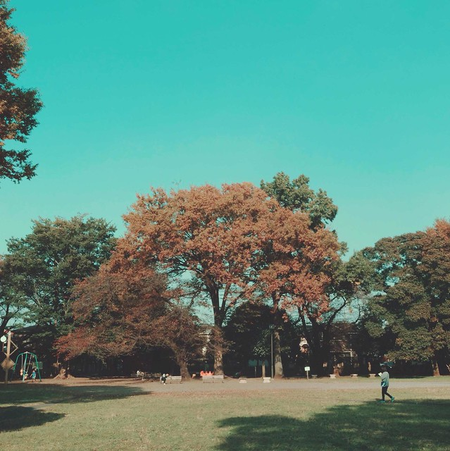 Early Autumn Park