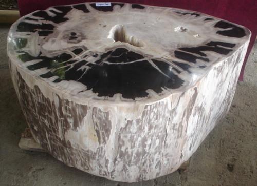 Petrified wood coffee table petrified wood coffee tables for Petrified wood furniture for sale