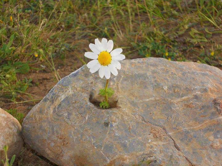 Kamen i cvet 18051158236_40ab9a907b_b