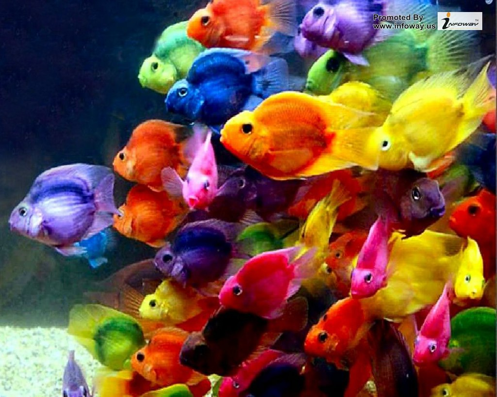 nice beautiful colorful fish ocean wallpaper natural wallp… | Flickr