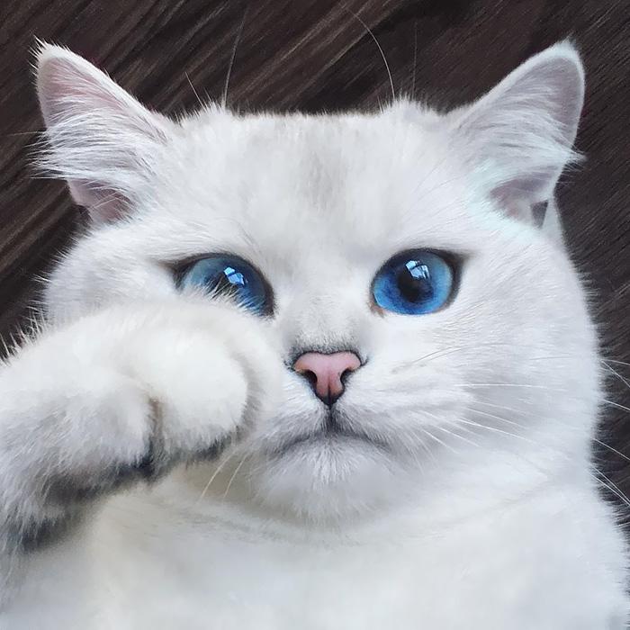 Котик Коби с самыми красивыми глазами - ПоЗиТиФфЧиК - сайт позитивного настроения!