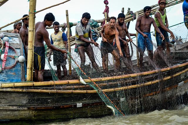 Hilsa catch, Bangladesh. Mohammad Mahabubur Rahman, 2016.