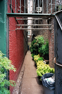 plant alley | by Dan Hewins