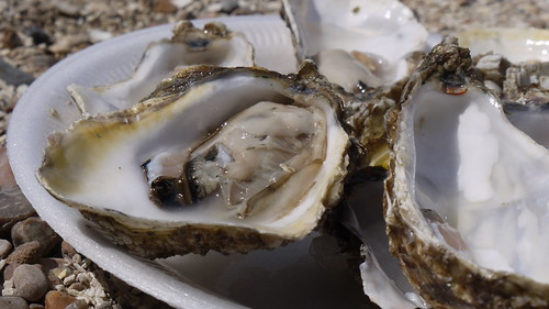 Oyster | by mild_swearwords