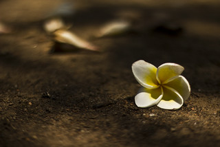 a flower and   story of two soul.......that ends like this | by SM. Tanvir