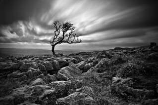 Twistleton Tree | by John Ormerod