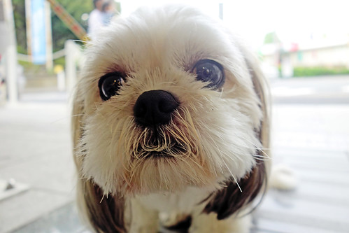 Shih Tzu Dog Names