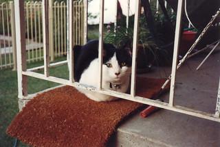 1993_10_PatchesGlamourShot