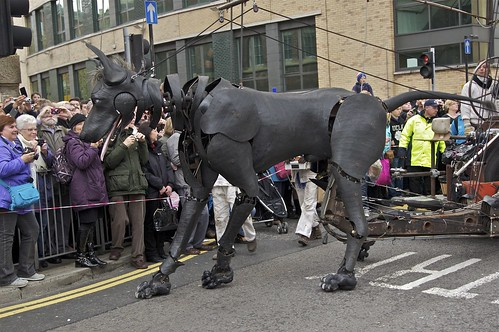 XOLO THE SEA ODYSSEY DOG | by TERRY KEARNEY