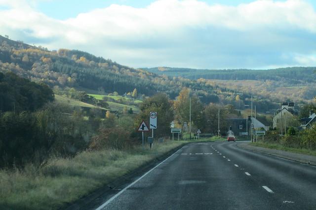 autumn trees 14
