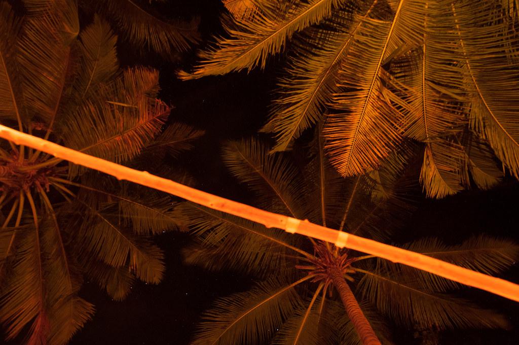 Geburtstag Unter Palmen Songkran Flickr