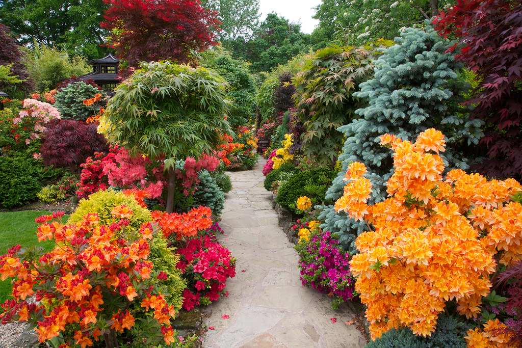 ... Azalea Flowers Line The Pathway To The Lower Garden (June 5th) | By Four