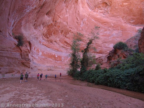 Coyote Gulch near Jacob Hamblin Arch, Grand Staircase-Escalante National Monument, Utah