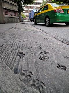 Paw prints - Bangkok