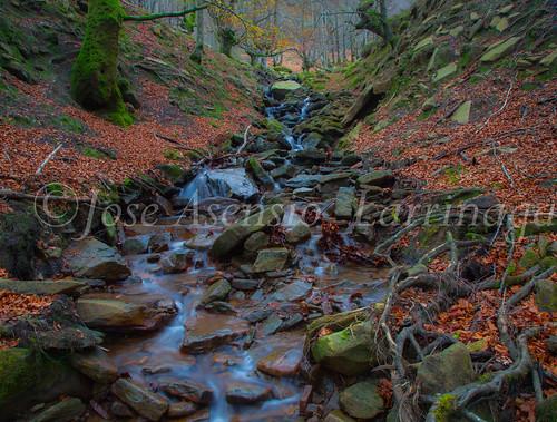 Parque natural de Gorbeia #DePaseoConLarri #Flickr      -2072