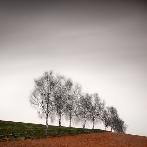 [ rural space: birches ] | by panfot_O (Bernd Walz)