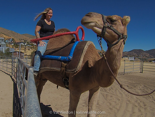 virginia city camel races - val in real life