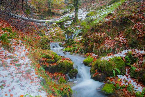Parque Natural de #Gorbeia #DePaseoConLarri #Flickr      -1959