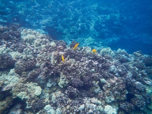 Snorkeling Honaunau Bay